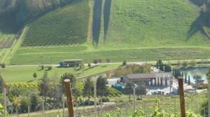 Italian Wine Estate