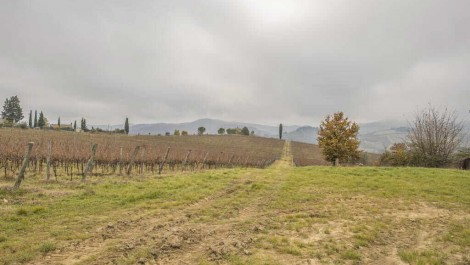 Winery and Agriturismo