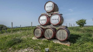 Productive winery with accommodation business