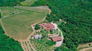 Brunello di Montalcino wine estate for sale
