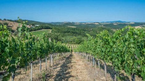 Small wine estate, Maremma Tuscany