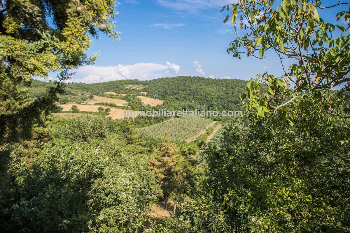 Organic Olive oil farm estate