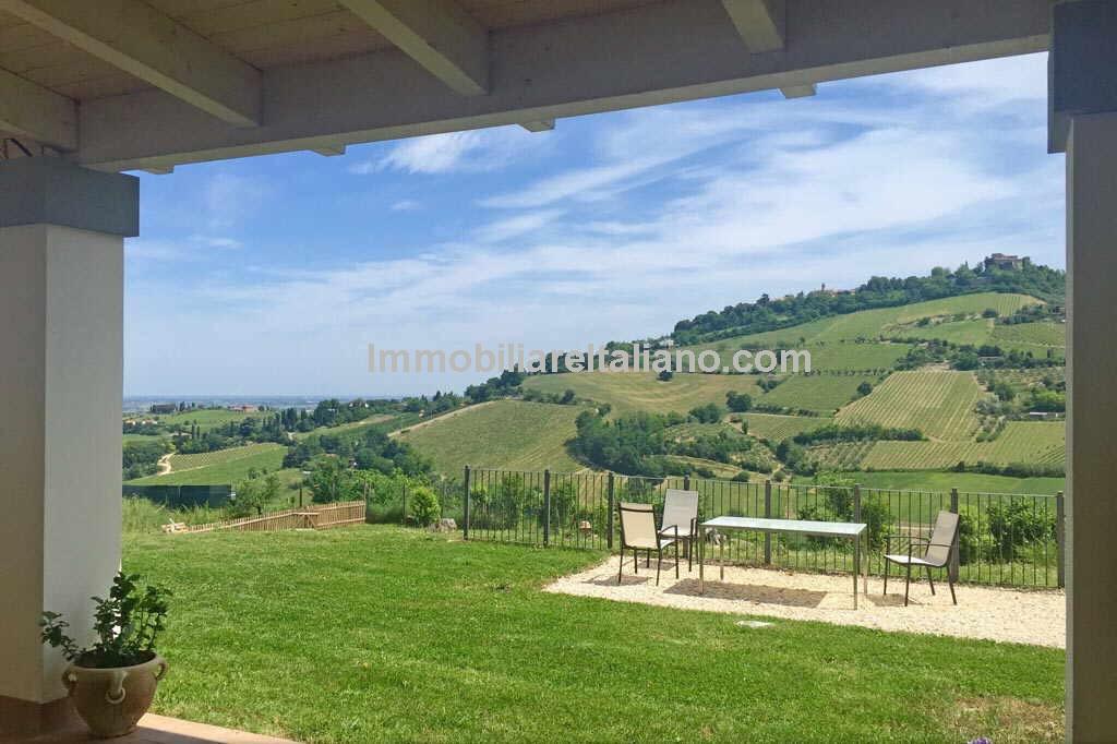 Cesena  Emilia Romagna, Sangiovese vineyard