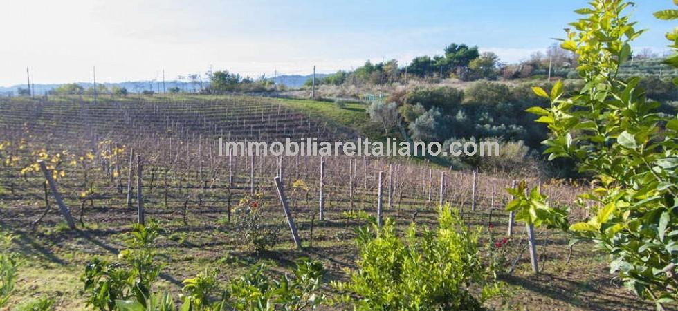 Ripatransone Marche estate with luxury villas, cellar, vineyard, olive grove, truffle ground and sea views.