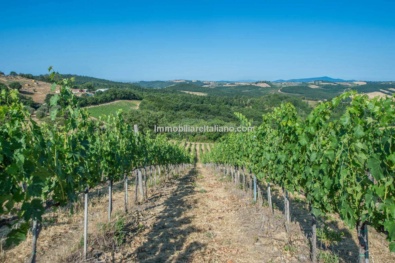 Small wine estate, Maremma Tuscany