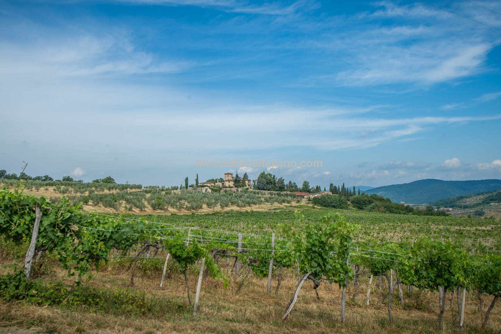 Commercial Property Tuscany Italy Wine and Olives