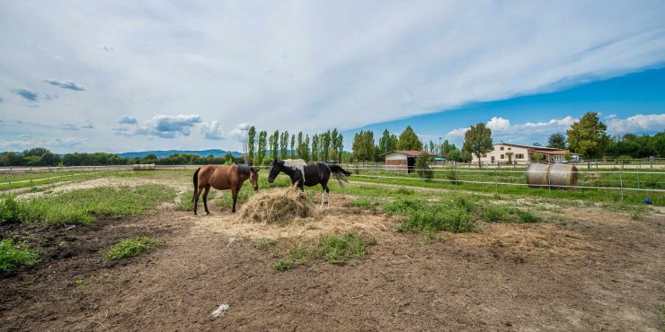 Italian horse property