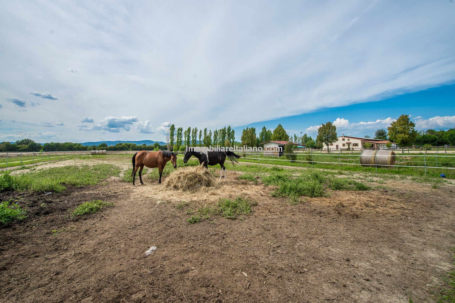 Equestrian property for sale Arezzo Tuscany Italy