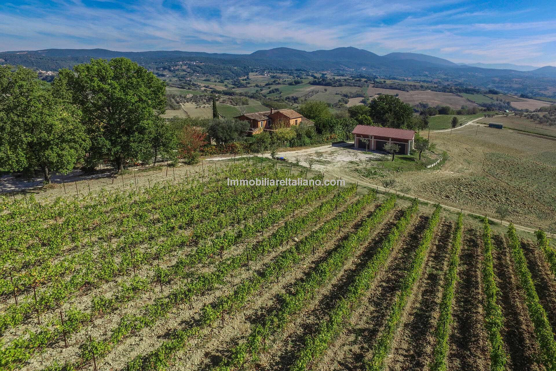 Farmhouse with Vineyard for sale Umbria Italy