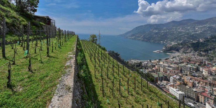 Amalfi Farm