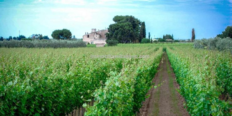 Vineyard for sale Italy