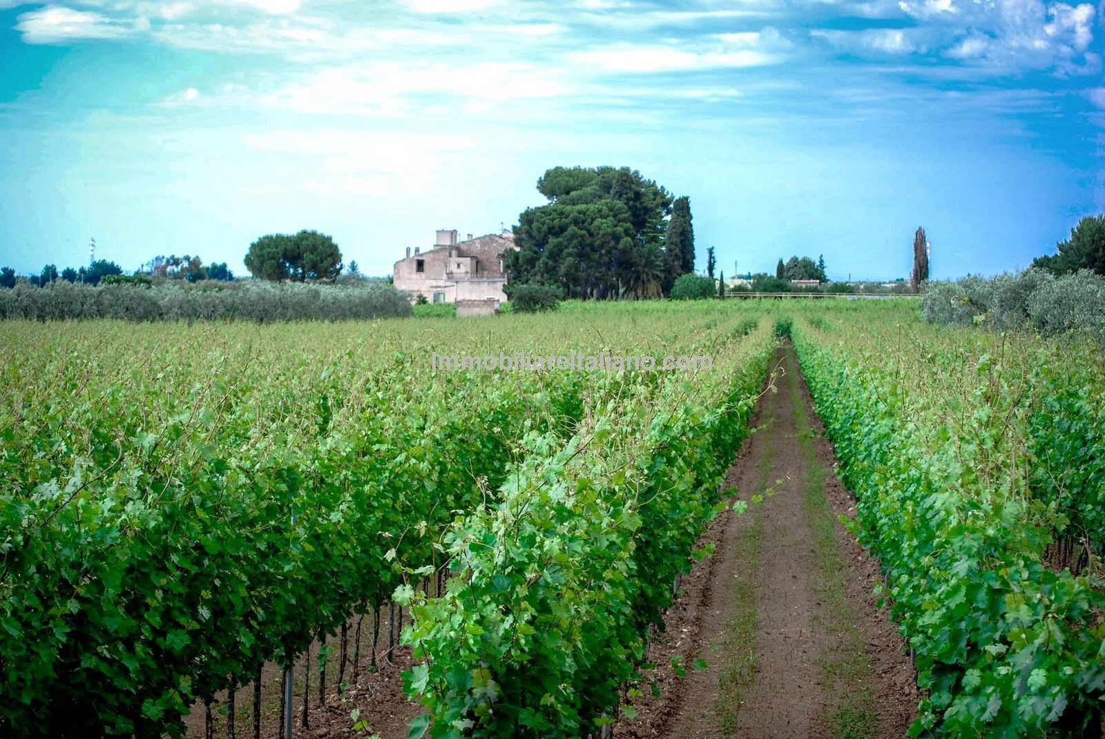 Italian vineyards for sale