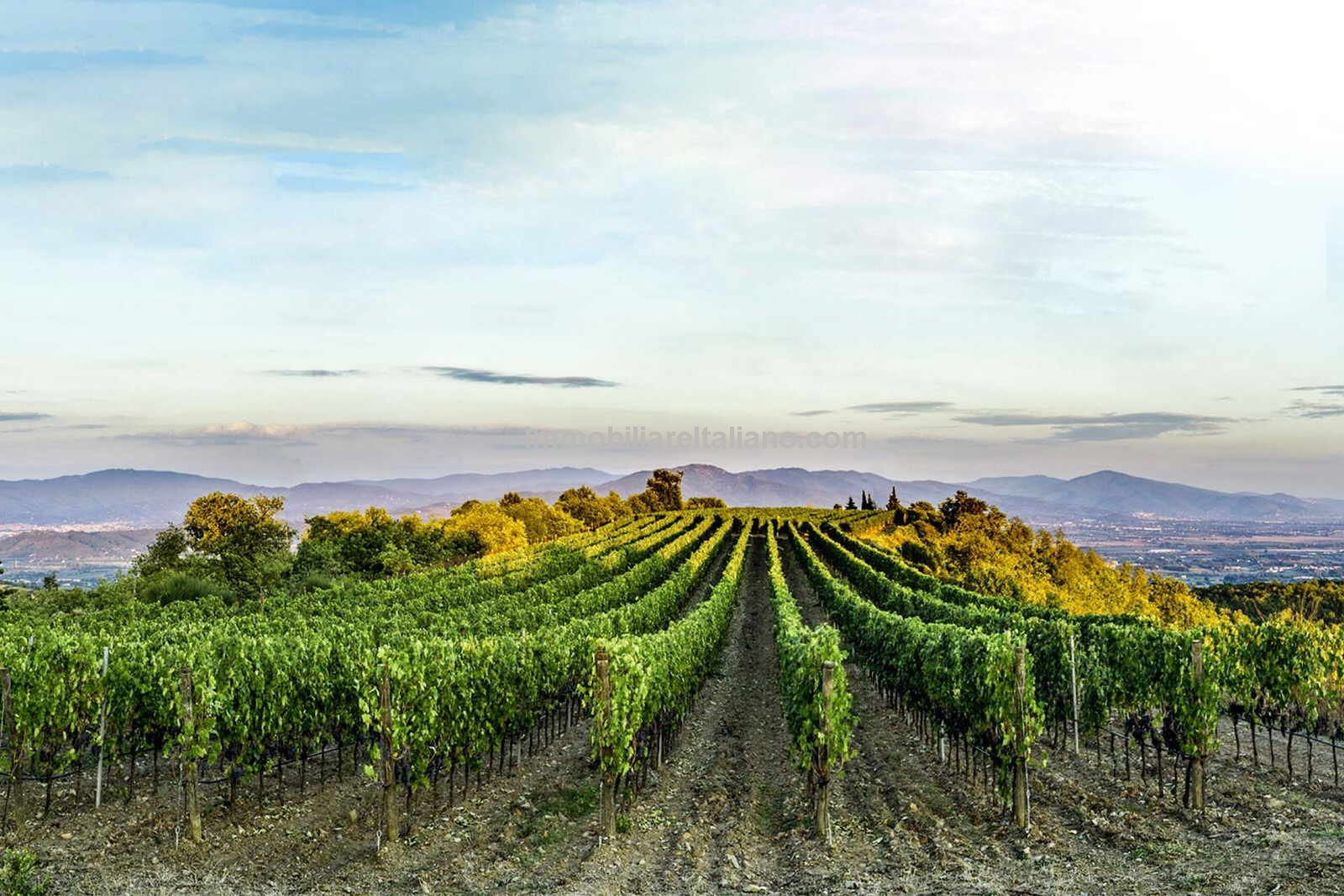 View of the Vineyards at this Tuscan organic Winery